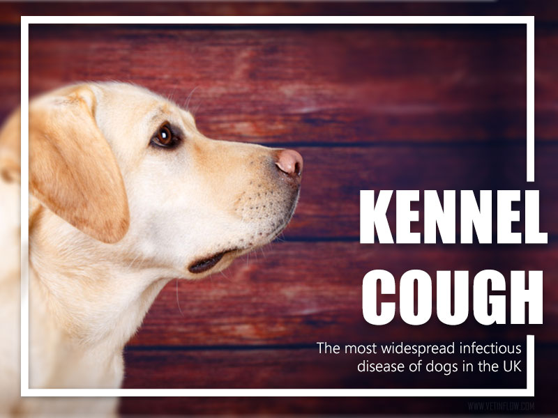 Is Kennel Cough In Dogs Contagious To Cats