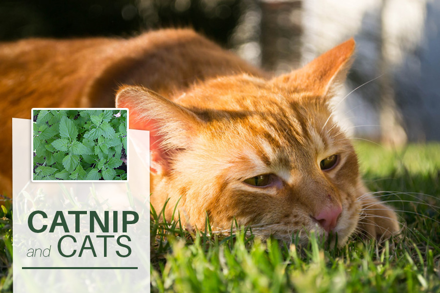 Cats Don T React To Catnip