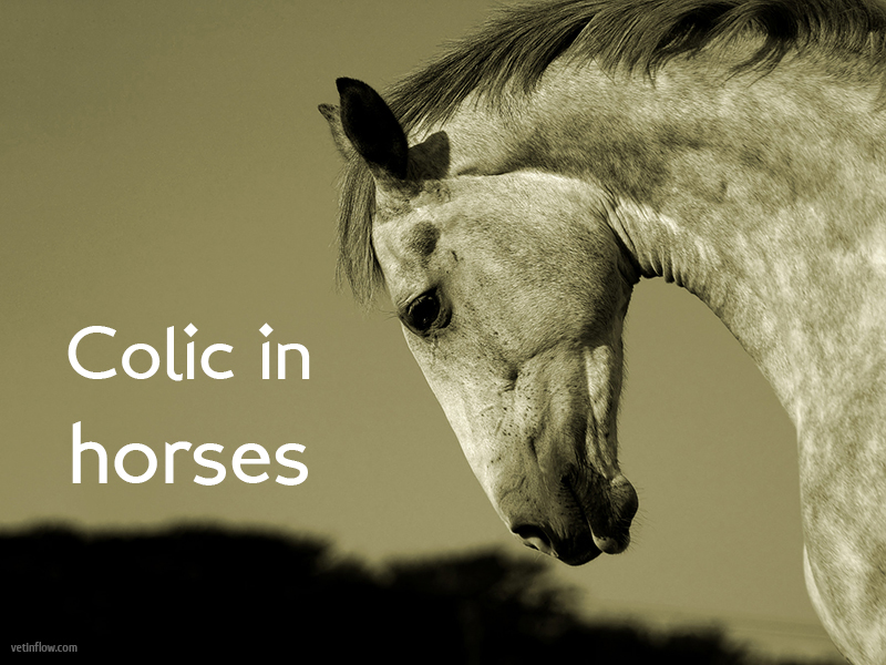 The Pet Professionals - Colic in horses