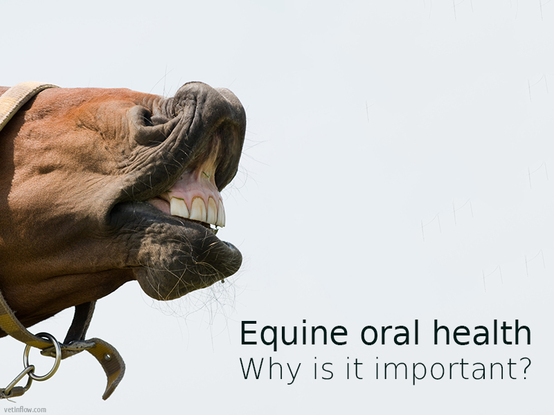 Blog post - Equine oral health - Why is it important