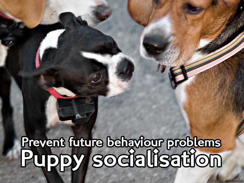 The Pet Professionals - Puppy socialisation