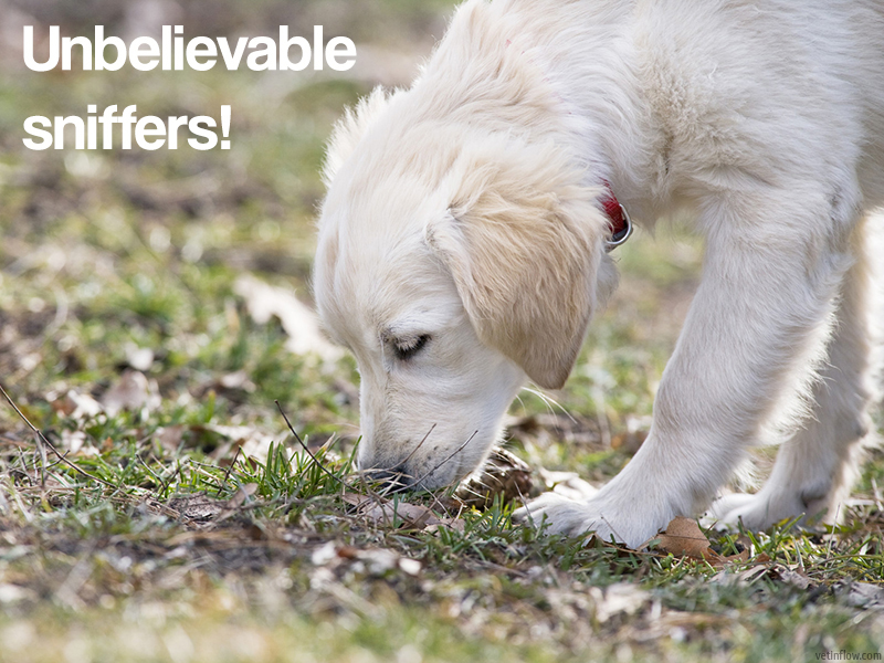 The Pet Professionals - Unbelievable sniffers