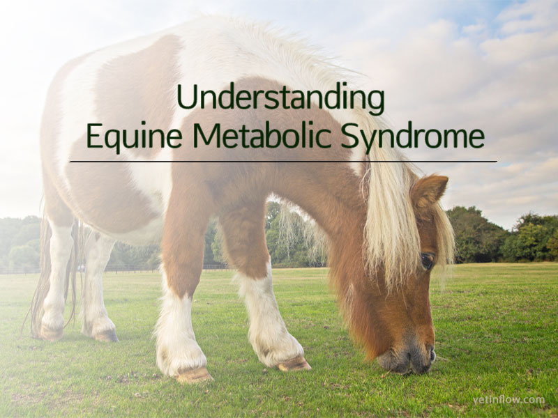 Understanding Equine Metabolic Syndrome