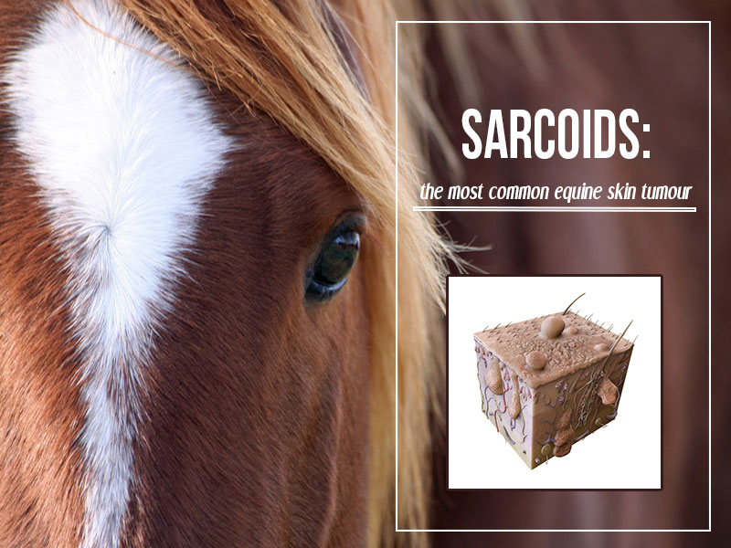 The Pet Professionals - Sarcoids - the most common equine skin tumour