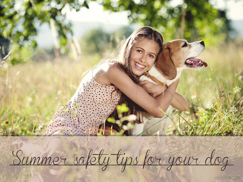The Pet Professionals - Summer safety tips for your dog