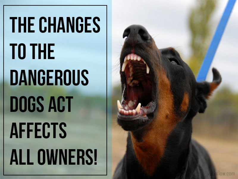 The Pet Professionals - The changes to the Dangerous Dogs Act affects all owners!