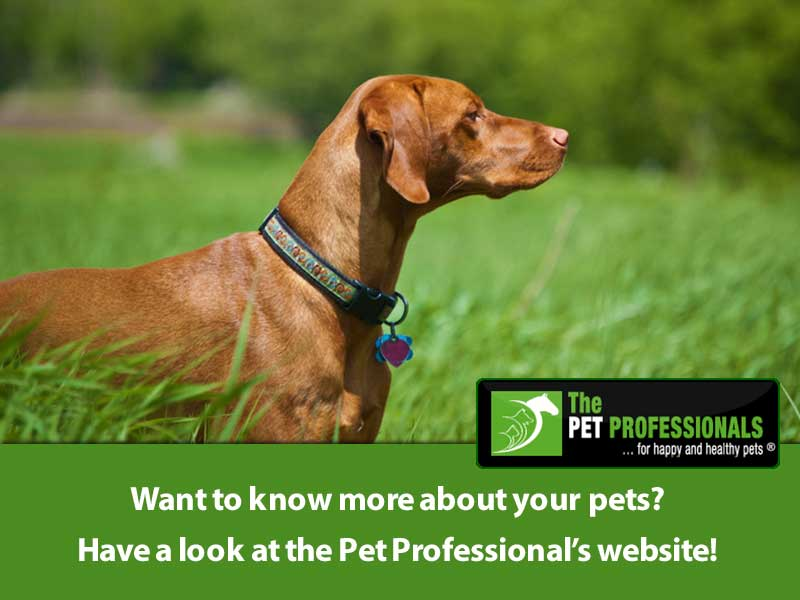 The Pet Professionals - Pete the Vet Endorsement