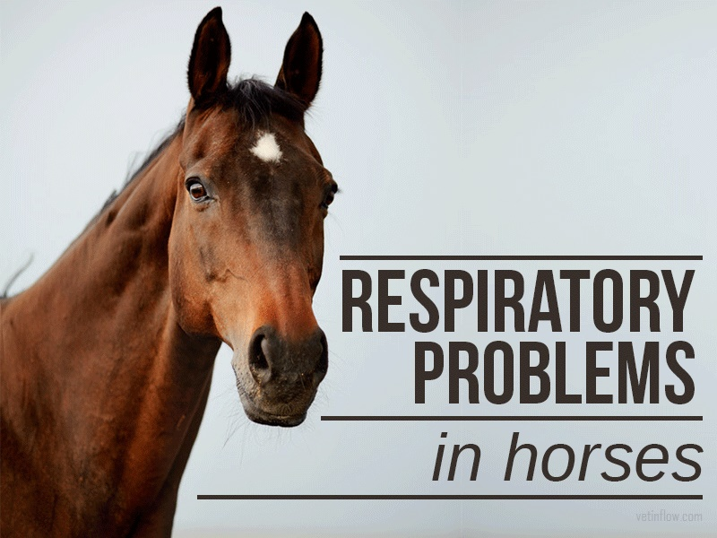 The Pet Professionals - Respiratory problems in horses