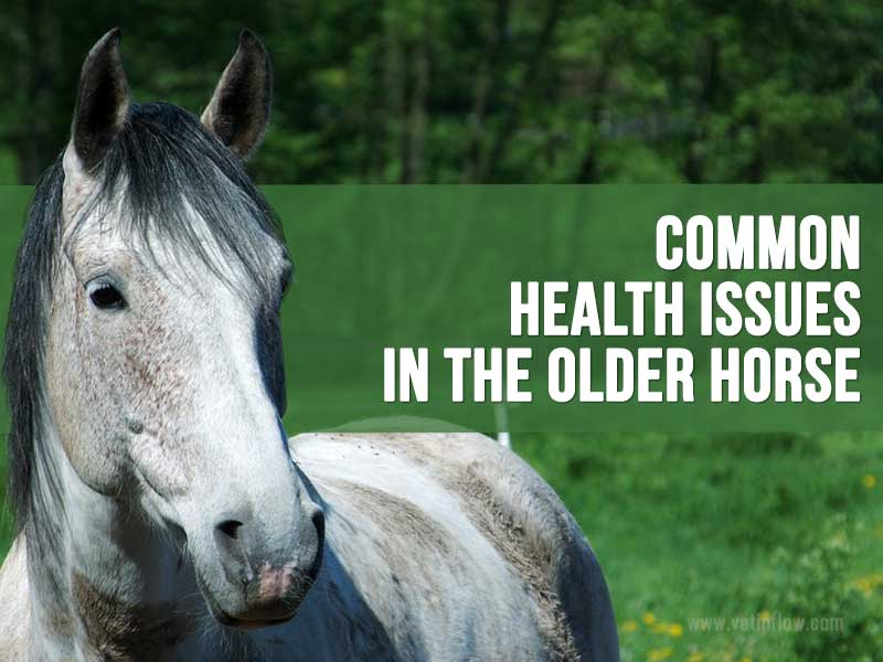 Blog post - Common health issues in the older horse