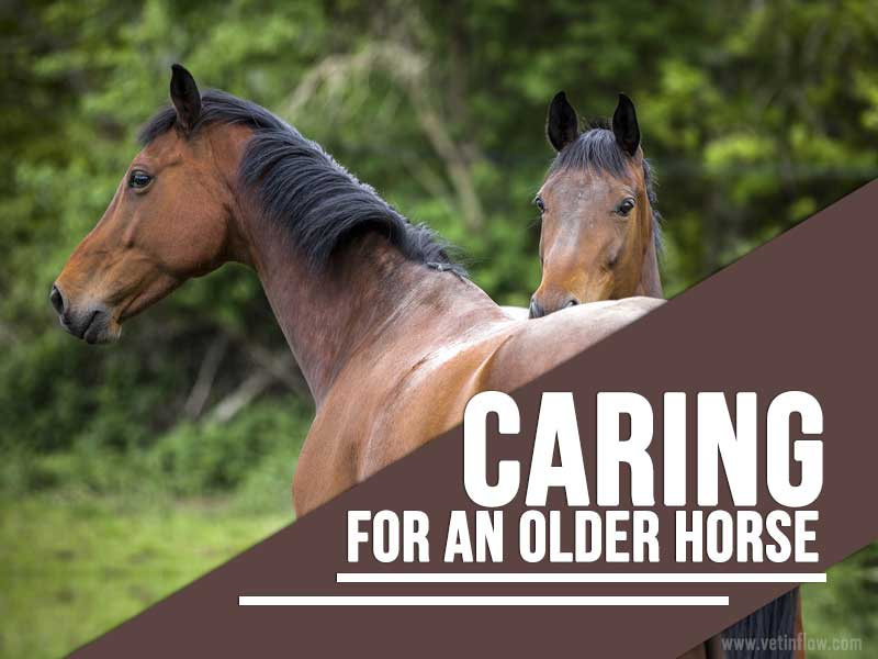 Horse 13 - Caring for an older horse