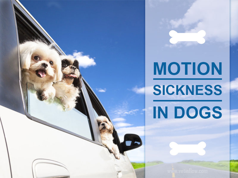 Blog post - Motion sickness in dogs
