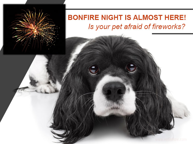 Dogs 16 - Bonfire night is almost here Is your pet afraid of fireworks
