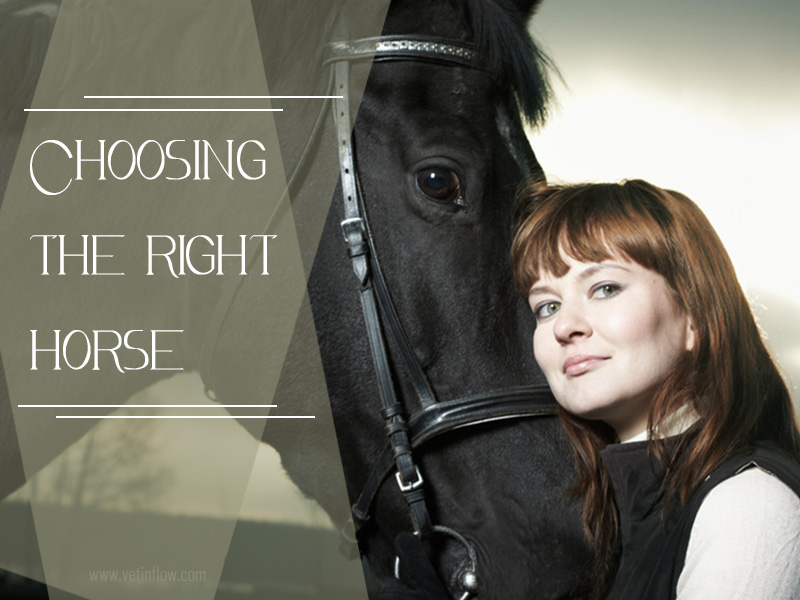 Horse 14 - Choosing the right horse