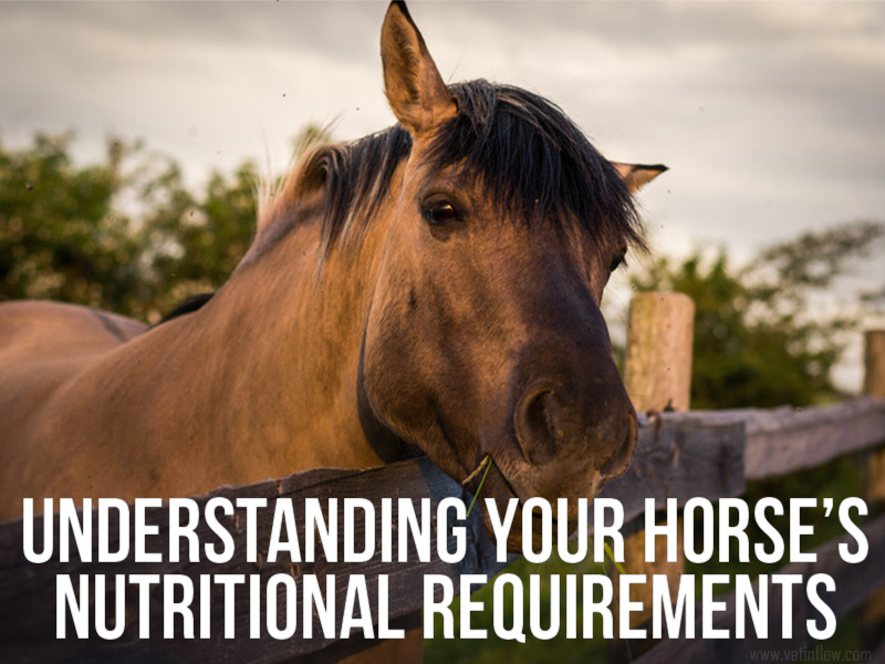 Horse 15 - Understanding your horse's nutritional requirements
