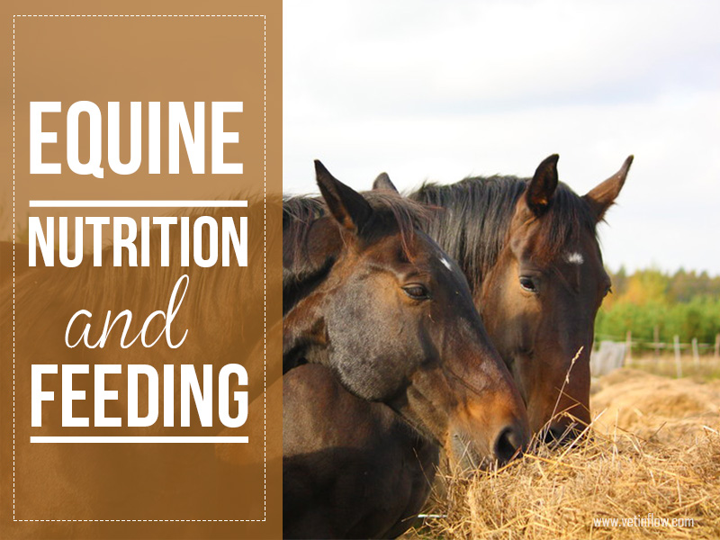 Horse 16 - Equine nutrition and feeding
