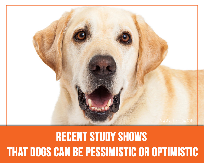 Dogs 19 - Recent study shows that dogs can be pessimistic or optimistic