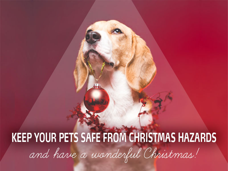 Dogs 21 - Keep your pets safe from Christmas hazards and have a wonderful Christmas!