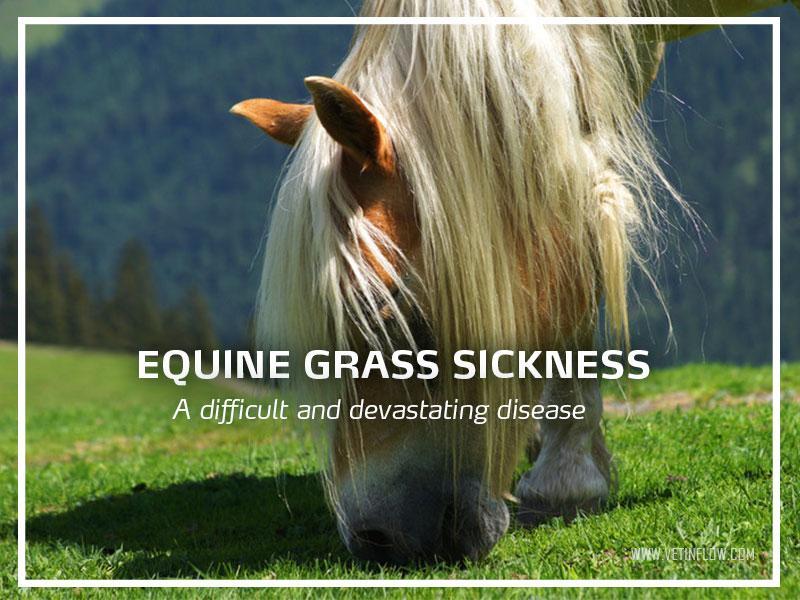 Equine-grass-sickness