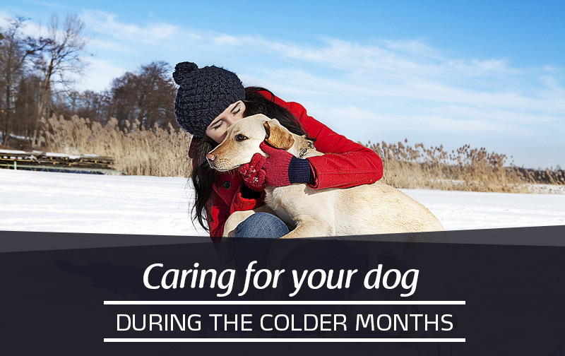 Caring for your dog during the colder months