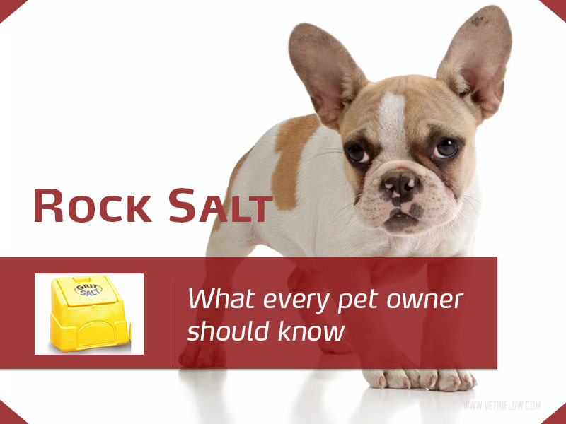 Dogs 24 - Rock salt - What every pet owner should know