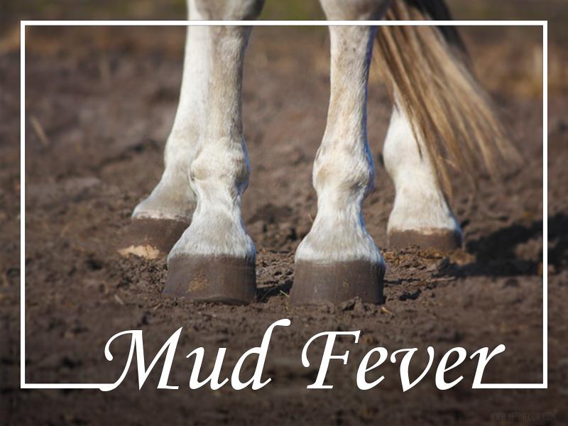 Horse 20 - Mud fever