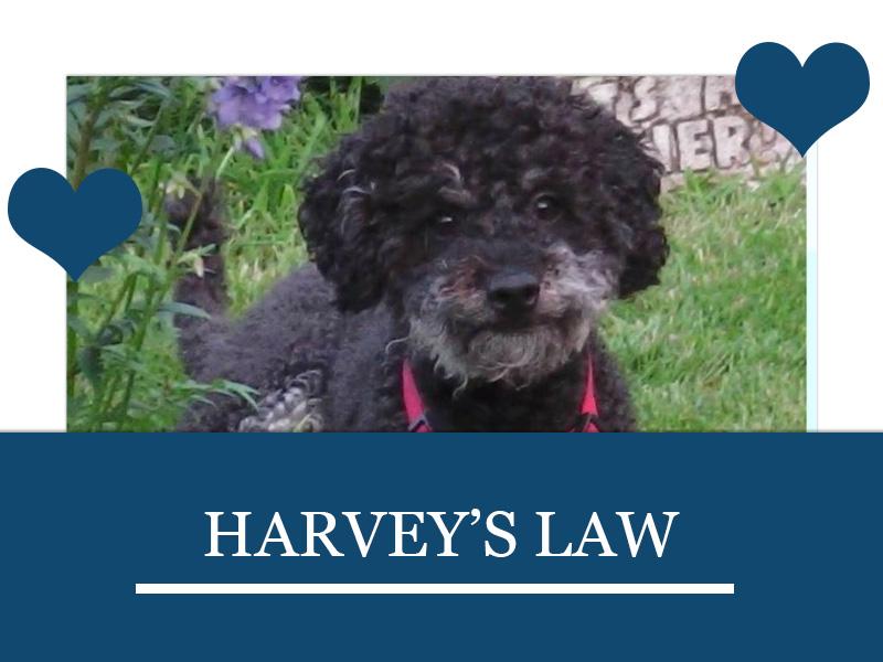 Dogs 25 - Harvey's Law
