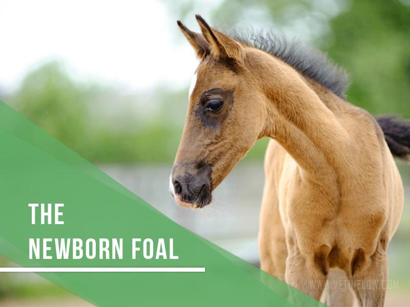 Horse 22 - The newborn foal