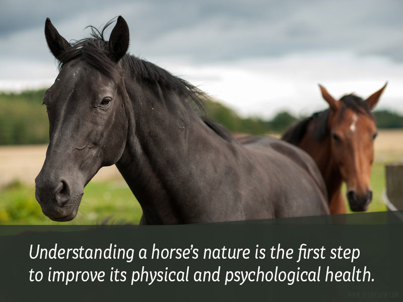 Horse 23 - Understanding a horses nature is the first step to improve its physic