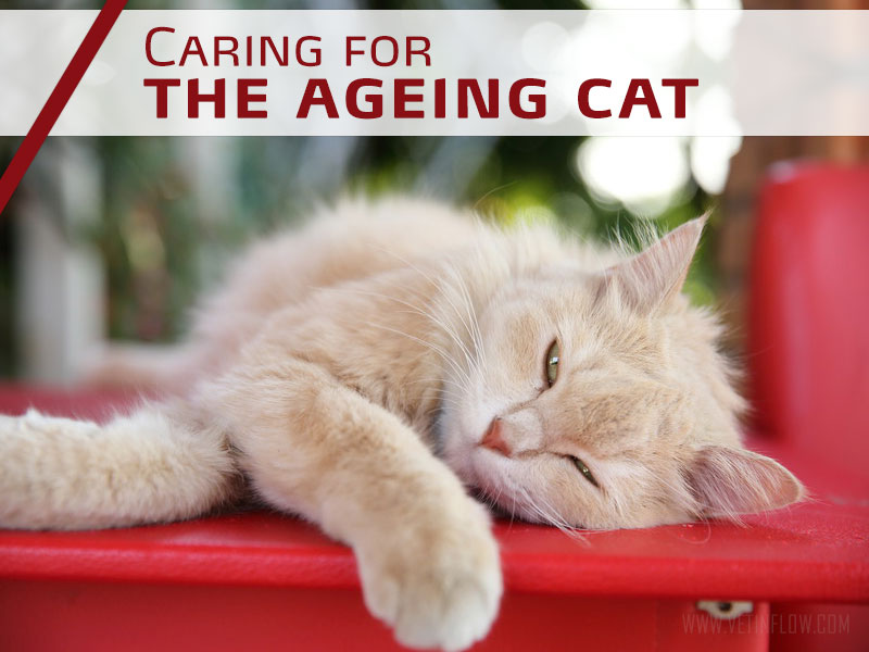 Cats 1 - Caring for the ageing cat
