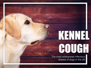 Dogs 28 - Kennel cough