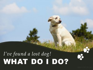 Dogs 29 - Ive found a lost dog