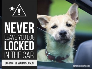 Dogs 30 - Never leave you dog locked in the car