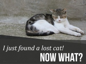 I-just-found-a-lost-cat