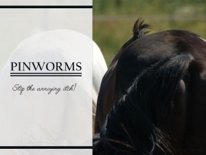 Pinworms, stop the annoying itch