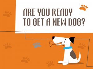 Sainsbury article - Are you ready to get a new dog