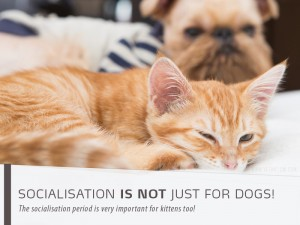 Cats 6 - Socialisation is not just for dogs