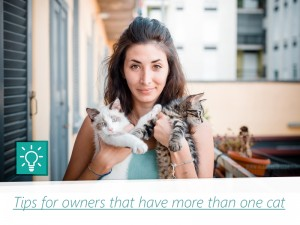 Cats 7 - Tips for owners that have more than one cat