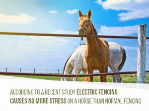 Horse 27 - Electric fencing causes no more stress on a horse than normal fencing