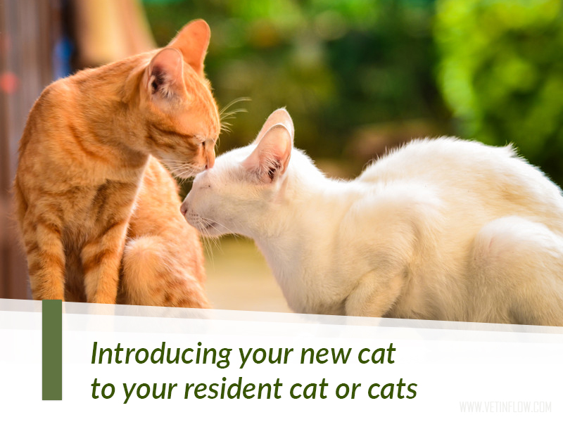 New cat aggressive to resident cat