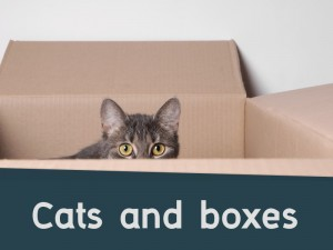 Cats 9 - Cats and boxes