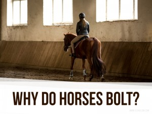 Horse 28 - Why do horses bolt