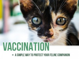 Cats 11 - Vaccination - A simple way to protect your feline companion