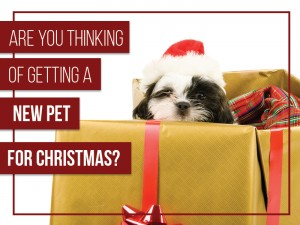 Dogs 37 - Are you thinking of getting a new pet for Christmas