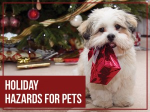 Dogs 38 - Holiday hazards for pets