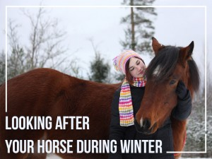 Horse-32---Looking-after-your-horse-during-winter