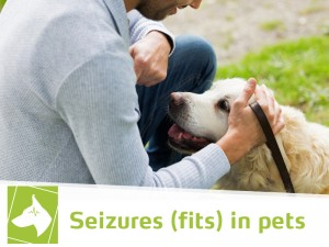 Dogs-42---Seizures-(fits)-in-pets
