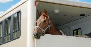 Horse-35---Horsebox-Safety-Week
