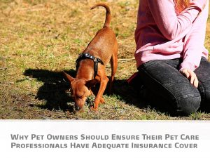 Blog post - The Pet Professionals - Why Pet Owners Should Ensure