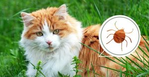 Cats - Parasites in Cats