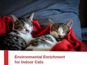 Cats-23---Environmental-Enrichment-for-Indoor-Cats
